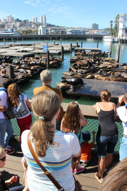 Looking at the famous sea lions at Pier 39